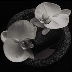 PATTON MIKE JEAN-CLAUDE VANNIER - Corpse Flower
